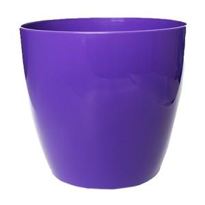 Pods AGA 18 violets