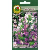 Visetona šizante (Tauriņu puķe)