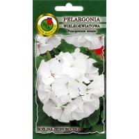 Pelargonija zonālā balta