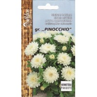 Asteres PINOCCHIO baltas