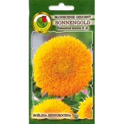 Saulespuķes Sonnengold