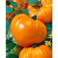 Tomāti Oxheart orange 10 sēklas