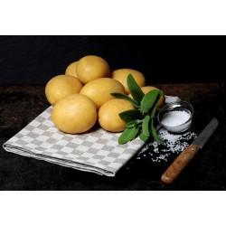Sēklas kartupeļi Madeira 2kg (Sertificēti)