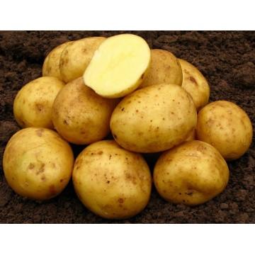 Sēklas kartupeļi Nandina 2kg (Sertificēti)