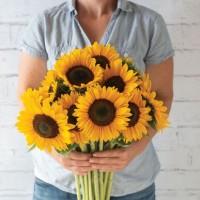 Saulespuķes Sunrich Summer Provence (20 sēkl).