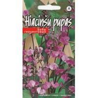 *Hiacinšu pupas (5sēkl.)