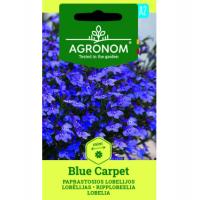 Lobēlijas Blue Carpet