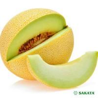 Melones Exelor F1 ( 5 sēklas)