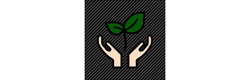 Augu aizsardzība