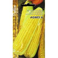 Kukurūza AGNES H